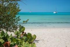 海葡萄和筏在巡洋舰海滩,长岛 库存图片