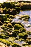 海藻沿海海洋背景纹理在岩石低潮的 库存照片