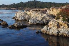 海藻盐水湖灰狼青苔点 免版税库存照片
