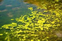 海藻绿色 库存图片