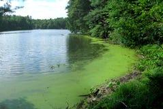 海藻 库存照片