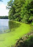 海藻 免版税库存图片