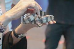 海蛇 免版税图库摄影