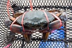 海螃蟹栓与在一个篮子的塑料绳索在摩托车 图库摄影
