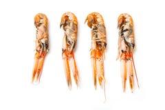 海螯虾或蝉虾 库存照片