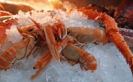 海螯虾龙虾新鲜的抓住在冰的 免版税库存照片