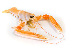 海螯虾scampi 免版税库存照片