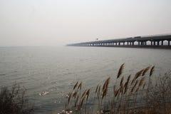 海表面和芦苇和桥梁 免版税库存照片