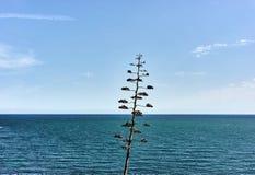 海视图蓝天和有些云彩 库存图片