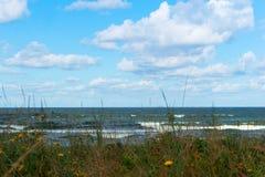 海视图通过狂放的玫瑰丛,海景通过草 库存照片