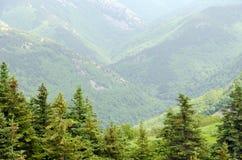 海角不列塔尼人的森林 库存图片