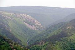 海角不列塔尼人的森林 免版税库存图片