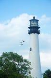 海角佛罗里达灯塔,海滩,植被,比尔Baggs海角佛罗里达国家公园,被保护区,鸟,海鸥, Key Biscayne 免版税库存照片