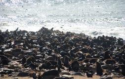 海角发怒封印储备 海岸纳米比亚概要 库存图片