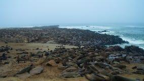 海角发怒海角海狗殖民地,纳米比亚 库存照片