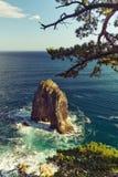 海角在日本海的Gorshkov的杉木海湾 免版税库存照片