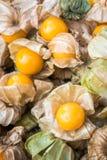 海角新鲜的鹅莓 图库摄影