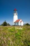 海角有当地花的布兰科灯塔 免版税库存照片