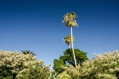 海角的棕榈 库存照片