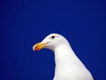 海角鸥画象 库存照片