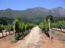海角winelands 免版税图库摄影