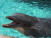 海豚会议 库存图片