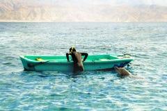 海豚使用与潜水者在一条小船附近在红海 库存照片
