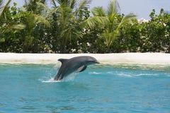 海豚使用 库存图片