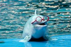 海豚公园显示 免版税库存照片