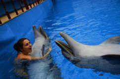 海豚和女孩 免版税库存图片