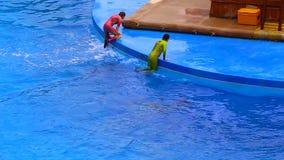 海豚和教练员在海洋公园香港 股票录像