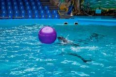 海豚和球 免版税库存照片