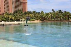 海豚在亚特兰提斯旅馆 免版税库存照片