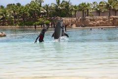 海豚在亚特兰提斯旅馆 免版税库存图片