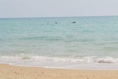 海豚在岸附近的海 库存照片