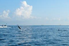 海豚在海游泳 免版税库存图片