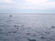 海豚在Mirissa/斯里兰卡前面的海 库存图片