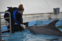 海豚展示在巴尔的摩,马里兰 库存照片