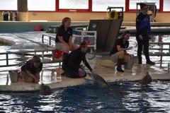 海豚展示在巴尔的摩,马里兰 免版税库存图片