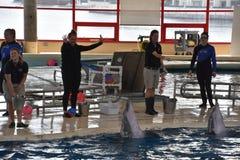 海豚展示在巴尔的摩,马里兰 库存图片