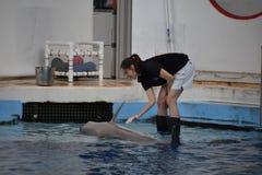 海豚展示在巴尔的摩,马里兰 免版税图库摄影