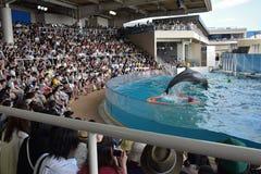海豚展示在日本 免版税图库摄影