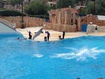海豚展示在Parc Asterix,法国 库存图片