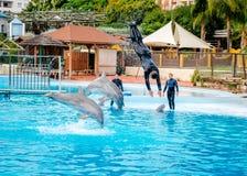 海豚展示在Selwo小游艇船坞在Benalmadena 图库摄影