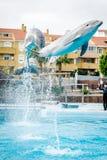 海豚展示在Selwo小游艇船坞 库存照片