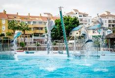 海豚展示在Selwo小游艇船坞 图库摄影