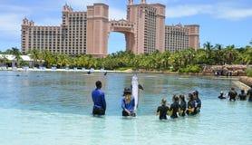 海豚岩礁经验 库存照片
