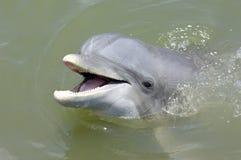 海豚微笑 免版税库存照片