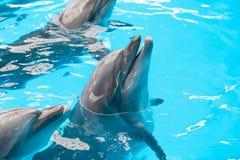 海豚微笑 库存照片