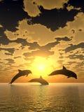 海豚日落黄色 免版税库存照片